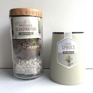 Scandinavian Terrarium & Norway Spruce Tree Kit